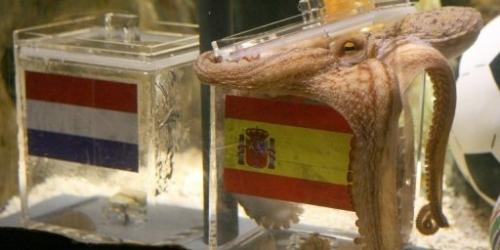 El pulpo Paul pronostica victorias de España y Alemania
