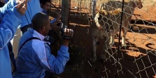 Uruguay salió de Kimberley para pasar la mañana con leones