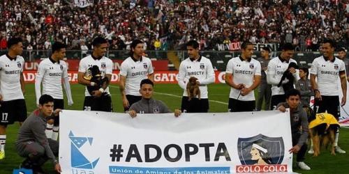 (VIDEO) Jugadores del Colo Colo, saltan a la cancha acompañados de perros